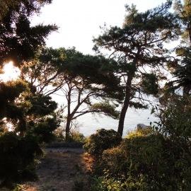 Фотография парка Лиго Морская, предоставленная М. Майоровым